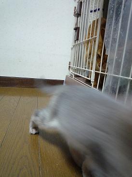 瑛兄ちゃん!