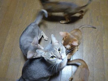 保母猫!?