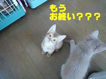 じゃれ猫ムニュムニュ