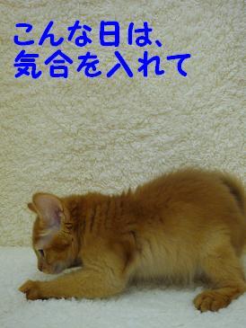 Red君W