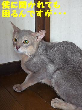 Keima