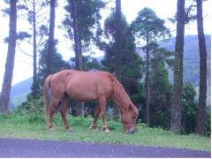 都井の岬の馬