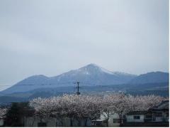 雪の高千穂と牧場の桜
