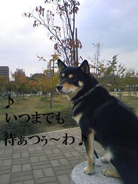 DCF_0085 (2)