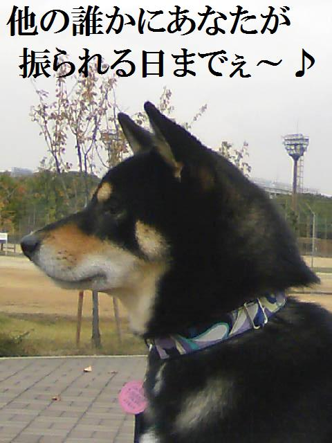 DCF_0090 (2)