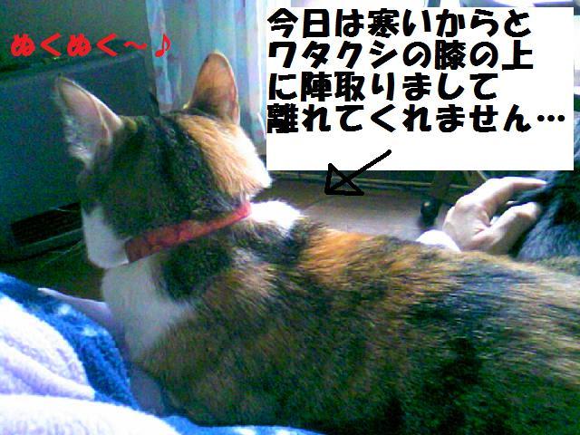 DCF_0013 (2)