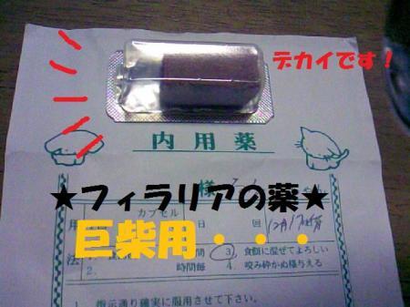 CAVR0JAI_convert_20081217020113.jpg