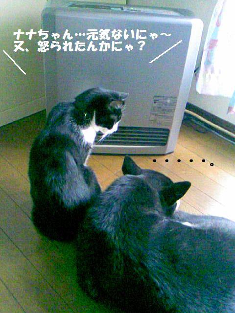 DCF_0001_20091208014325.jpg