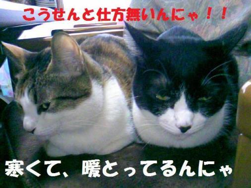 DCF_0003_20090125154712.jpg