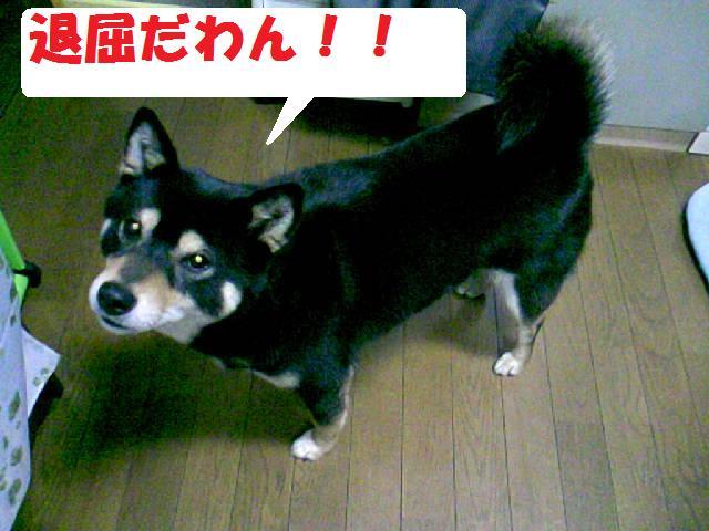 DCF_0004_20090505131426.jpg