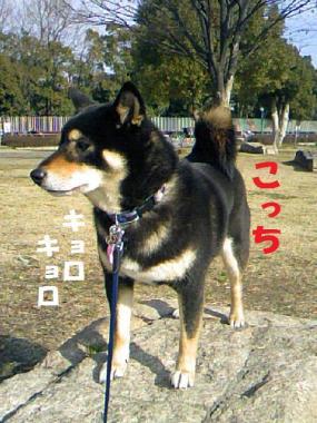 DCF_0005_20090207011656.jpg