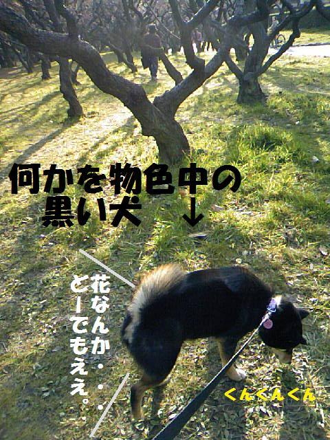 DCF_0005_20090226150934.jpg
