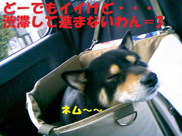 DCF_0006_20090203014119.jpg