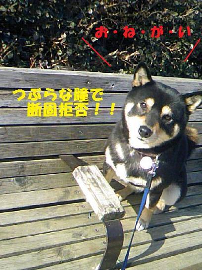 DCF_0007_20091220010510.jpg