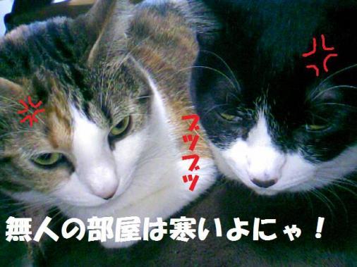 DCF_0008_20090125154652.jpg