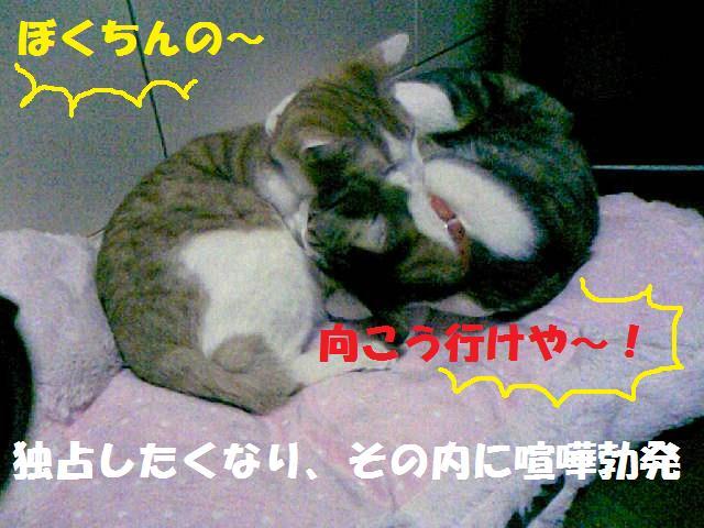 DCF_0008_20090125160037.jpg