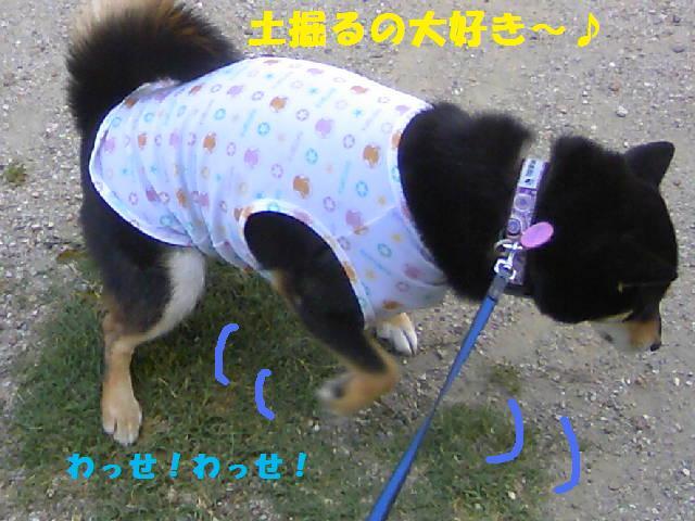 DCF_0008_20090902164005.jpg