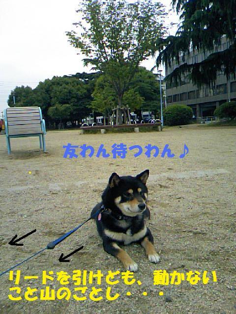 DCF_0009_20090625033749.jpg