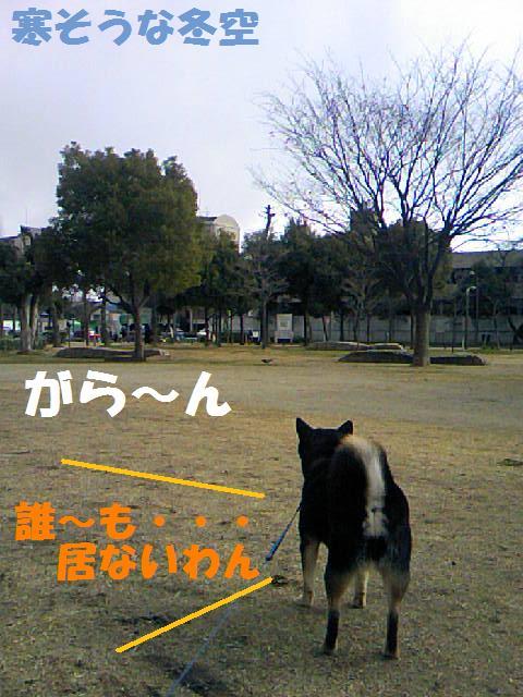 DCF_0010_20090124184324.jpg