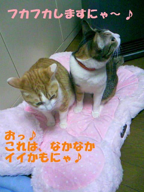 DCF_0010_20090125155945.jpg