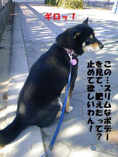 DCF_0010_20091216012924.jpg