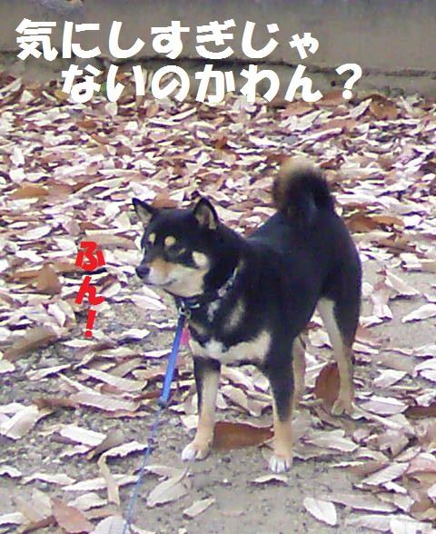 DCF_0011_20090116014258.jpg