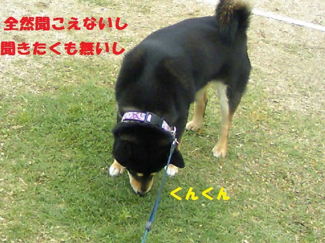 DCF_0011_20090625040310.jpg