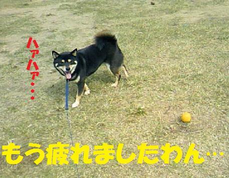 DCF_0012_20081030031640.jpg