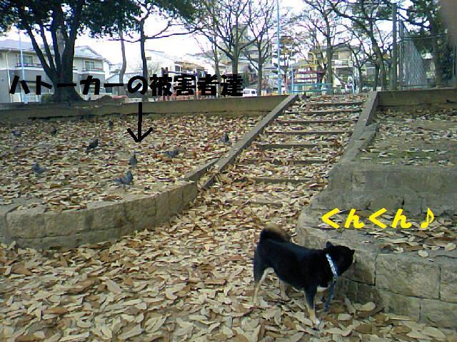 DCF_0012_20090116004943.jpg