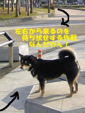 DCF_0012_20090207014008.jpg