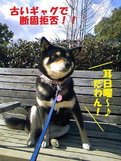 DCF_0012_20091220010503.jpg