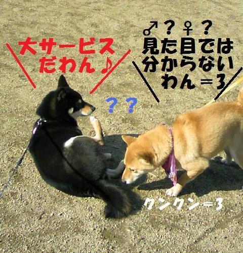 DCF_0013_20081221225327.jpg