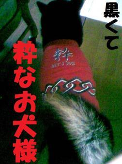 DCF_0013_20090107010430.jpg