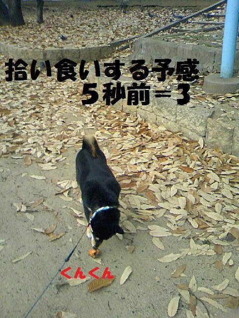 DCF_0013_20090116010716.jpg