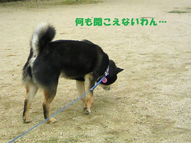 DCF_0013_20090625040303.jpg