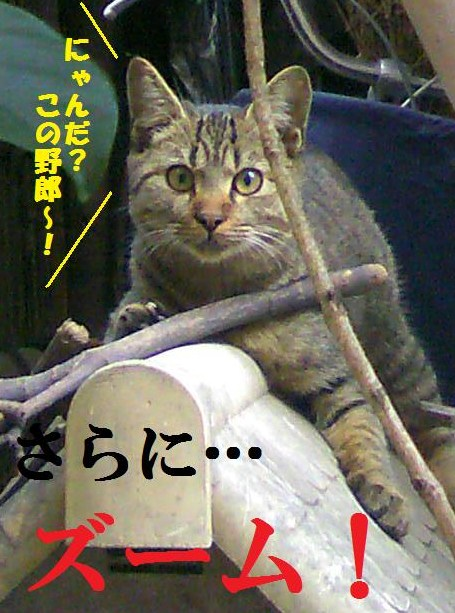 DCF_0013_20091116022711.jpg