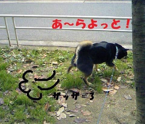 DCF_0014_20090116010152.jpg