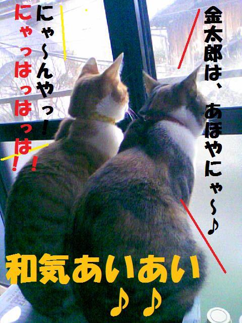 DCF_00154.jpg