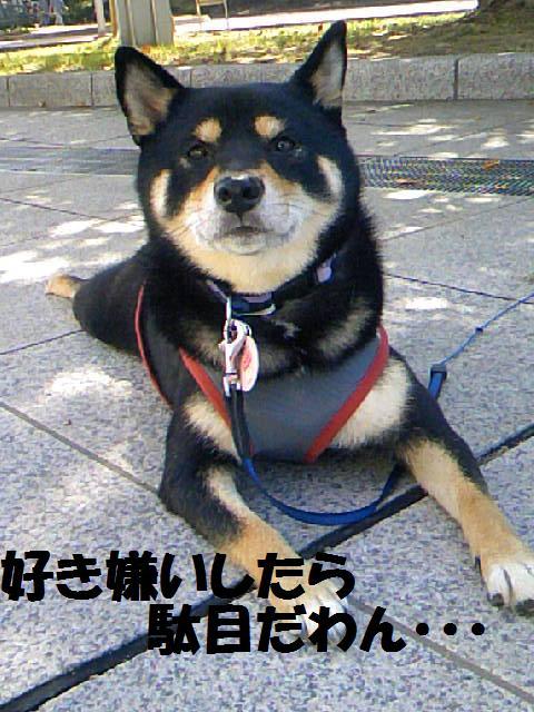 DCF_0015_20081008145800.jpg