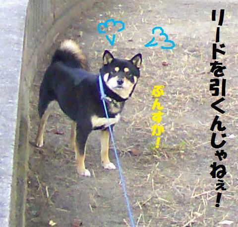 DCF_0016_20081203015322.jpg