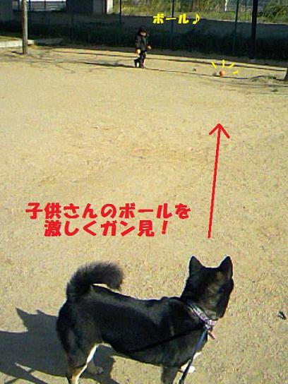 DCF_0016_20091220013055.jpg