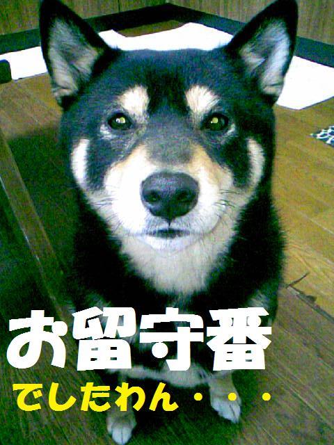 DCF_0018_20090112163258.jpg