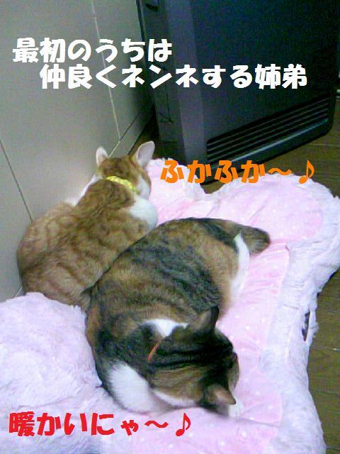 DCF_0019_20090125160016.jpg