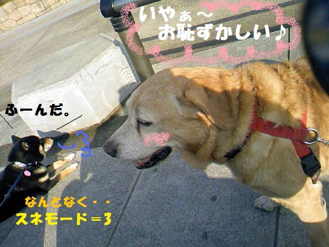 DCF_0019_20090207024348.jpg
