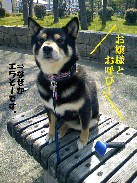 DCF_0019_20090410013057.jpg