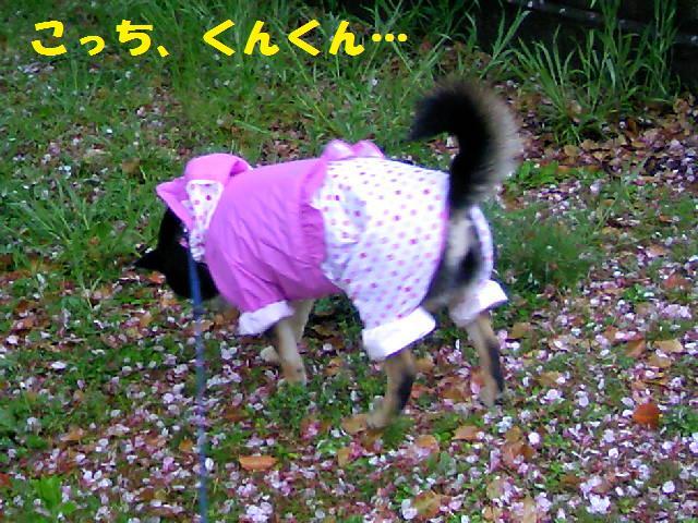 DCF_0019_20090416235422.jpg