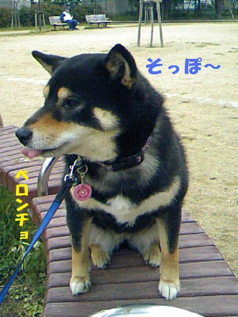 DCF_0019_20090625042825.jpg