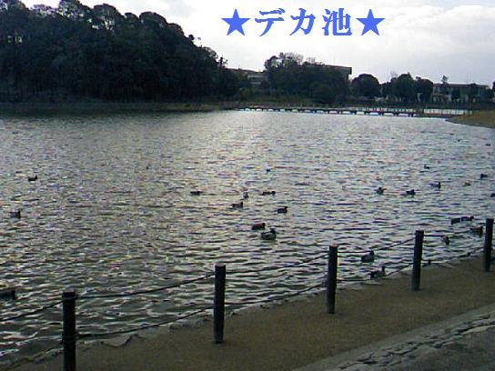 DCF_0019_20100116193611.jpg