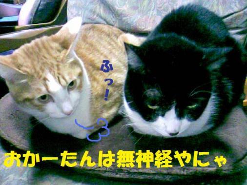DCF_0020_20090125154636.jpg