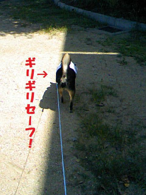 DCF_0021_20090727230601.jpg